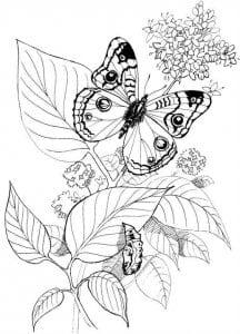 besplatno-raspechatat-raskraski-babochki-krasivye-216x300 Бабочки