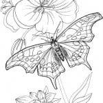 бесплатно распечатать раскраски для девочек цветы и бабочки