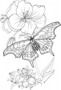 besplatno-raspechatat-raskraski-dlja-devochek-2_1-205x300 Бабочки