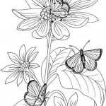 бесплатно распечатать раскраски про бабочек
