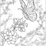 бесплатно скачать раскраску бабочка