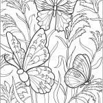 детей 3 4 бабочки раскраски