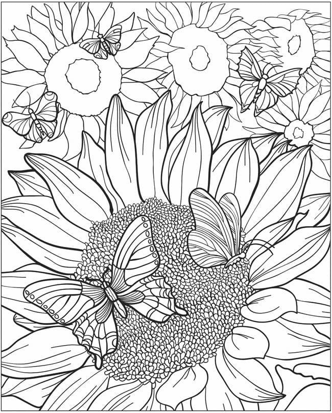 детей 3 4 лет раскраска бабочка для