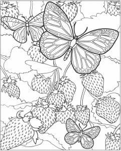 детей 3 лет раскраска бабочка