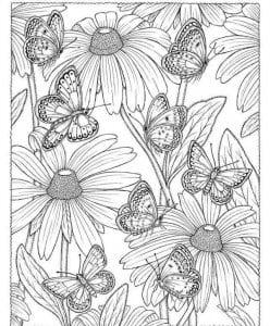 детей бабочка картинка раскраска для