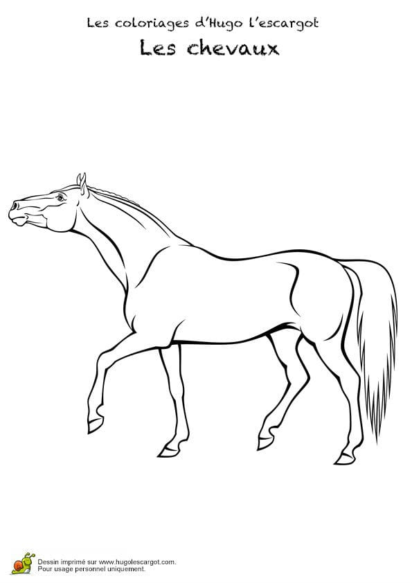 картинки про лошадей раскраски