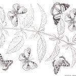детские раскраски бабочки