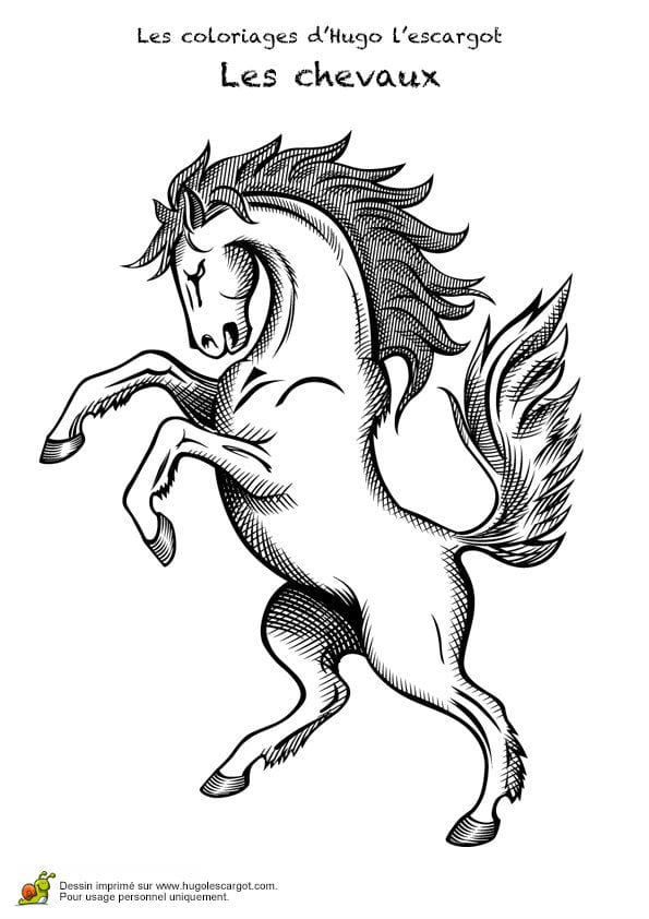 контур лошади для раскраски