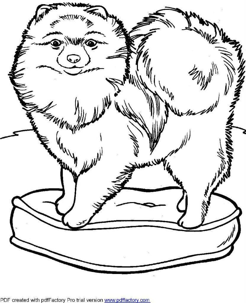 detskie-raskraski-sobaki детские раскраски собаки