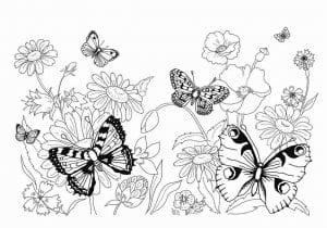детского сада раскраски бабочек для детей