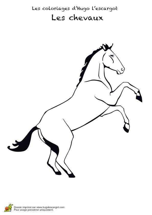 животные лошади раскраски девочек
