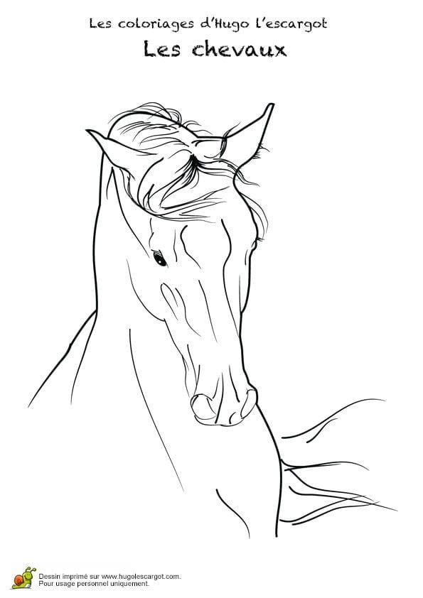 карандашом для детей раскраски рисунок лошади