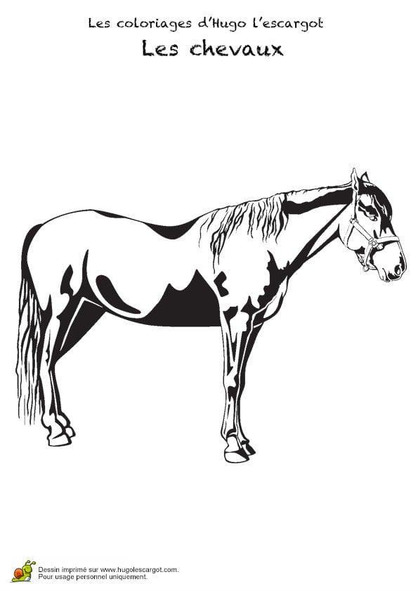 картинка для детей раскраска лошадь