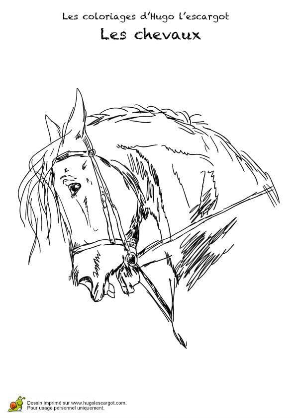 картинки красивые раскраски лошади