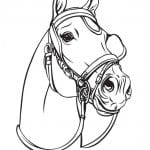 лошадей раскраски диких