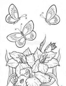 для девочек бабочки раскраски