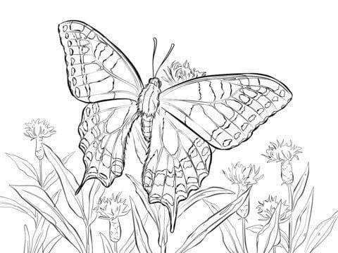 для девочек бабочки распечатать бесплатно раскраски