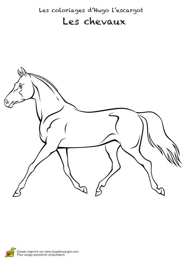 лошадей как настоящие раскраски про