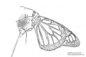 для малышей раскраска бабочка распечатать