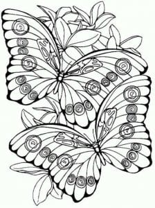 для малышей раскраска бабочка