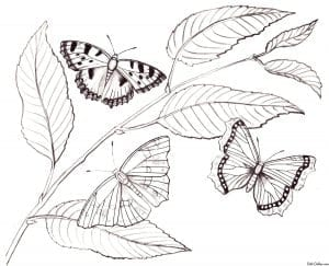 для взрослых бабочек раскраски