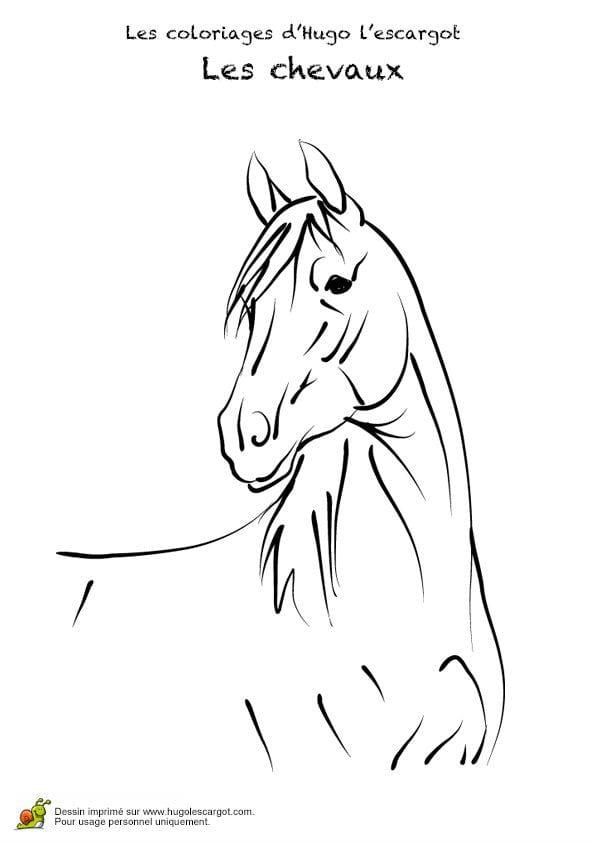 красивые раскраски лошади картинки