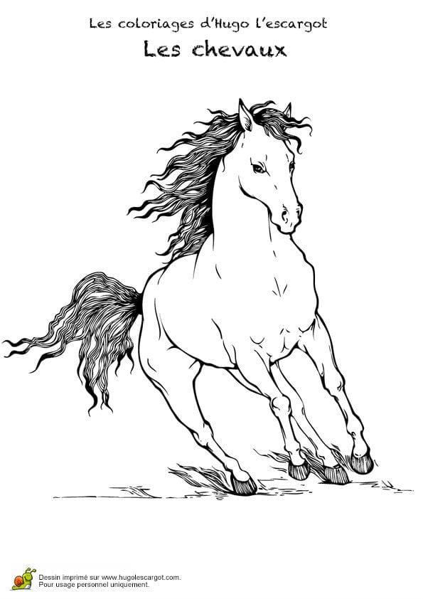 для раскраски контур лошади