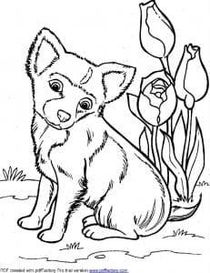 картинка раскраска собака