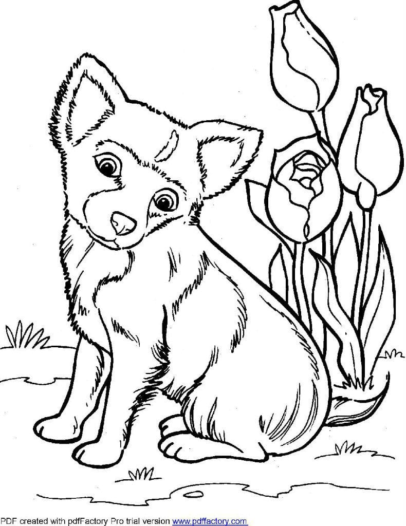 kartinka-raskraska-sobaka картинка раскраска собака