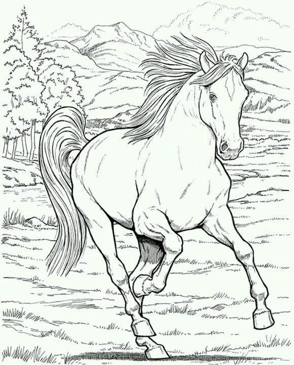 лошади бесплатно скачать раскраску