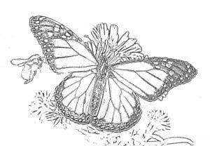 kartinki-raskraski-cvety-i-babochki-300x208 Бабочки
