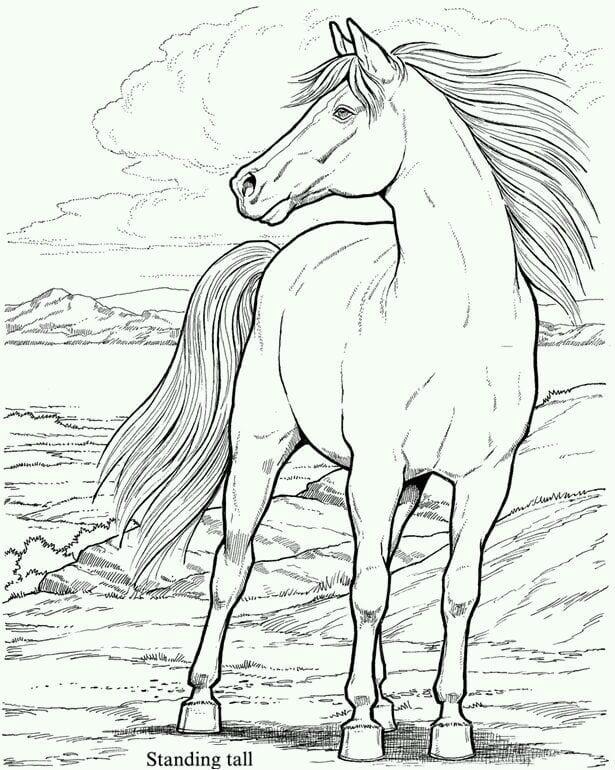 лошади карандашом для детей раскраски рисунок