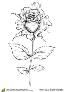 красивая день бесплатно раскраски валентинов