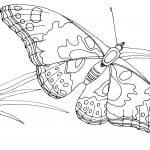 маленьких бабочка раскраска для самых