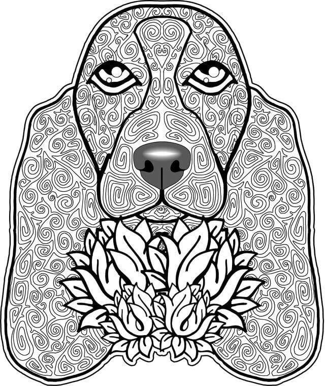 raskraska-sobaka-dlja-detej-2-3-let раскраска собака для детей