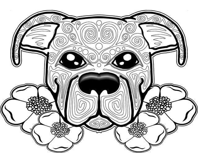 раскраска собака картинка