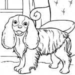 раскраски для мальчиков собаки