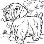 раскраски с собаками печать
