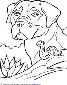 раскраски собаки разных пород