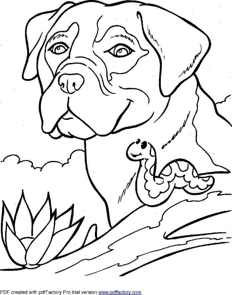 раскраски собаки разных пород - Рисовака