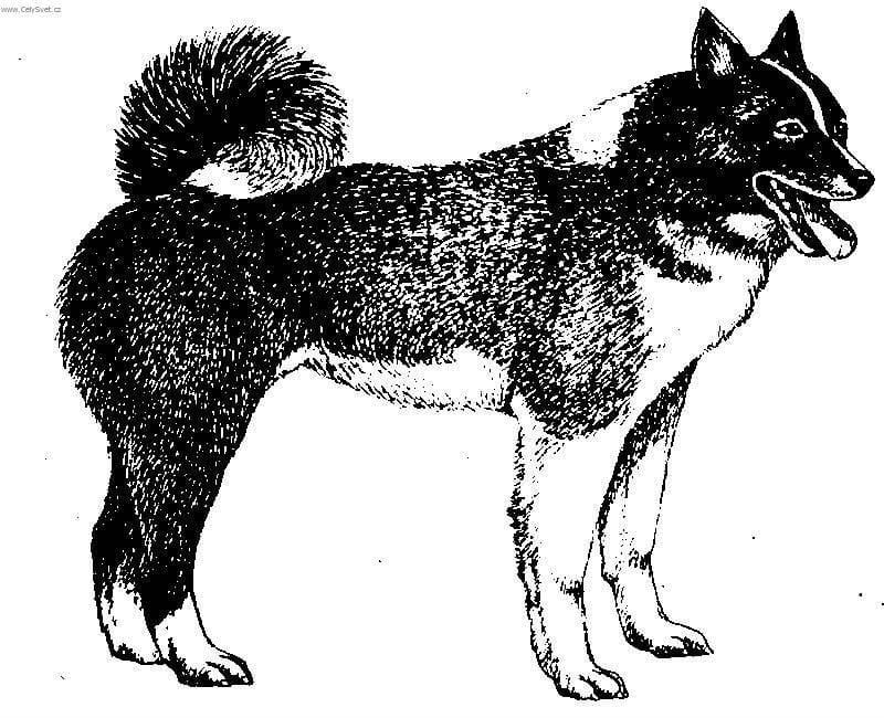 sobak-besplatno-raskraska собак бесплатно раскраска