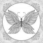 взрослых бабочек раскраски для