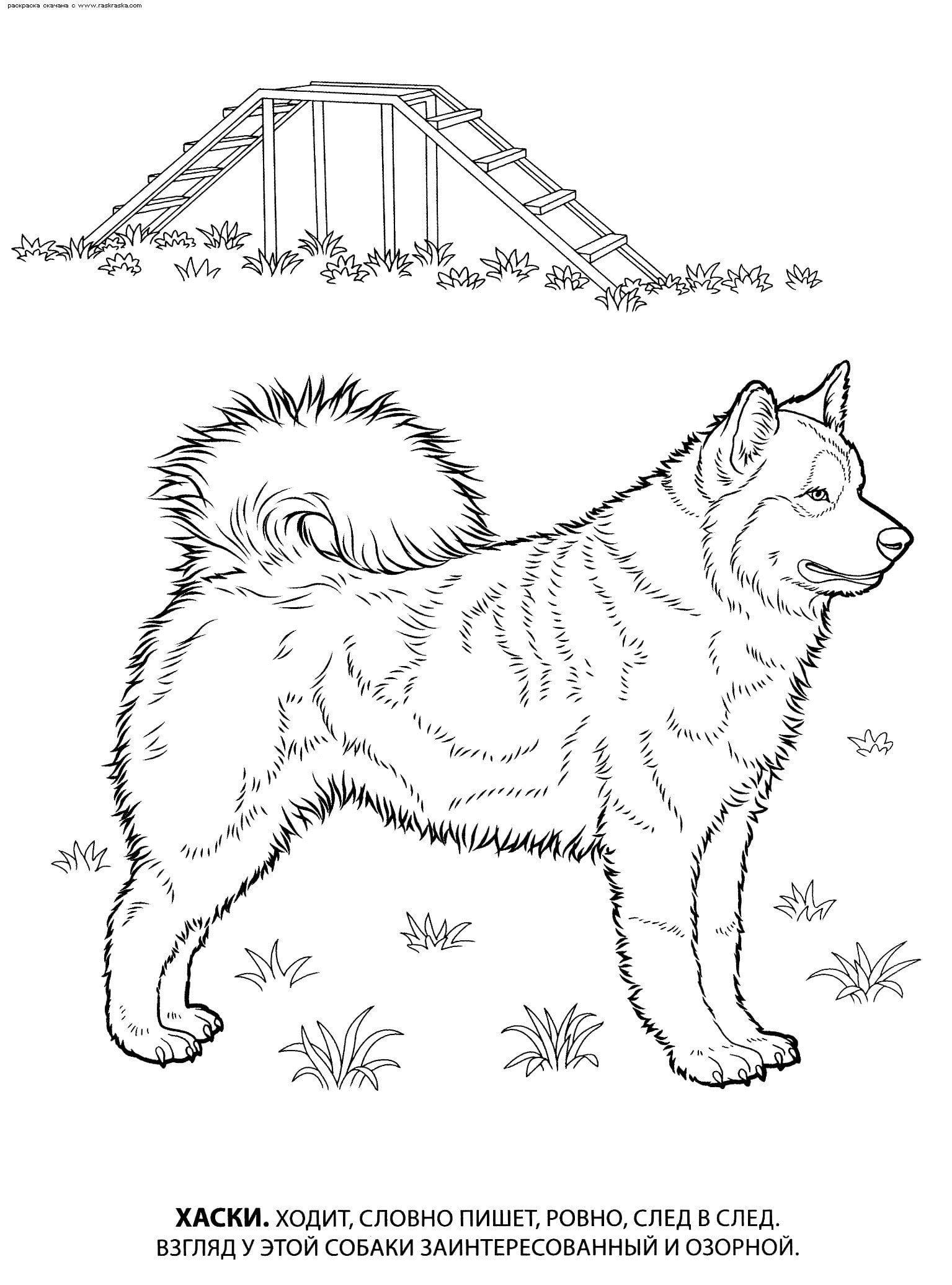 взрослых собака раскраска
