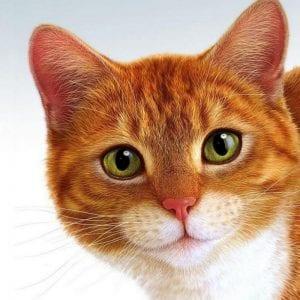 Кошки раскраски