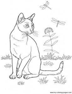 А4 раскраска антистресс для детей кошки