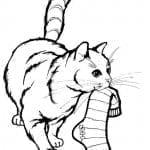 А4 раскраска кошки для девочек онлайн бесплатно