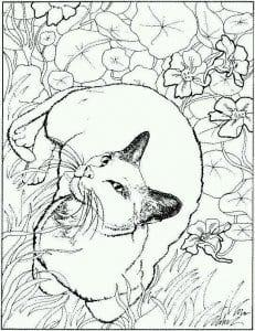 А4 раскраски кошек для девочек бесплатно
