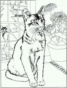 А4 раскраски кошки распечатать бесплатно