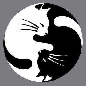 для детей кошки распечатать бесплатно раскраски
