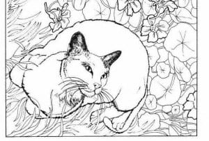 для девочек кошки раскраски